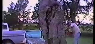 Man Saws Tree Trunk into Truck Bed: You Must Be Kidding Me!