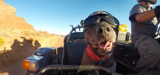 A Heartwarming Story: Ara Gureghian and His Dog Spirit on an Epic Motorcycle Journey All Over America